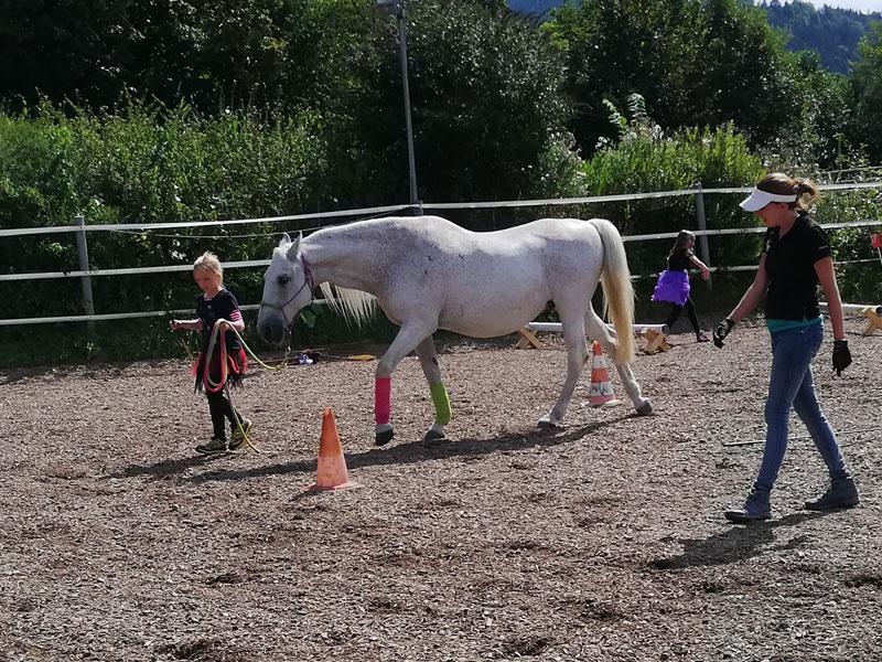 Bodenarbeit ist Kommunikation zwischen Mensch und Pferd