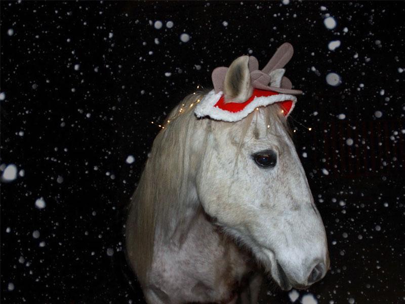 Bravo zu Weihnachten