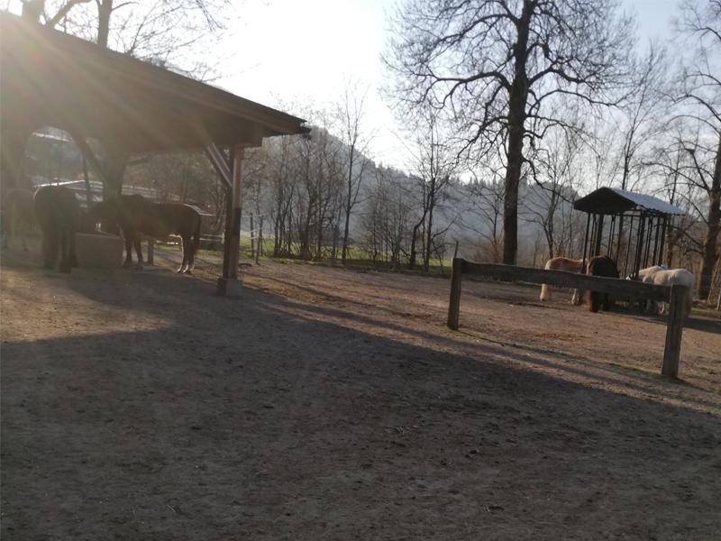 Morgenstimmung am Luech Hof