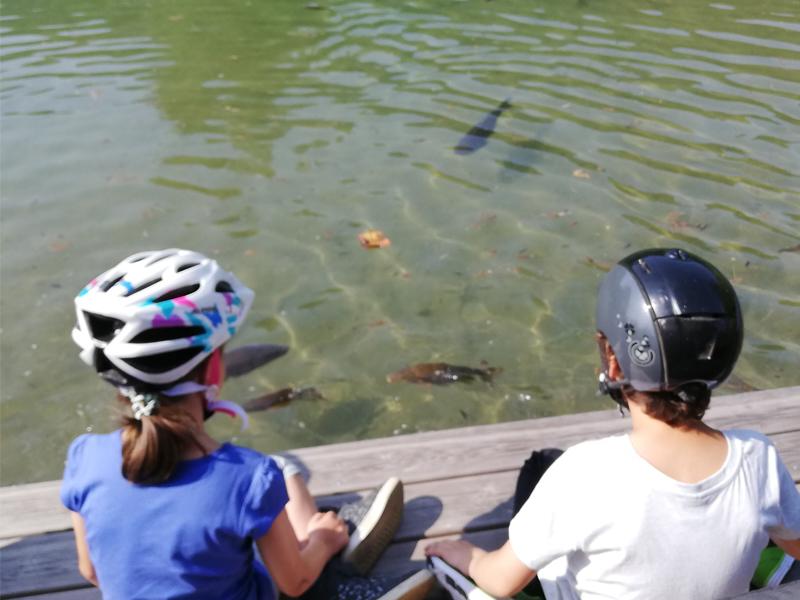 Fische beobachten
