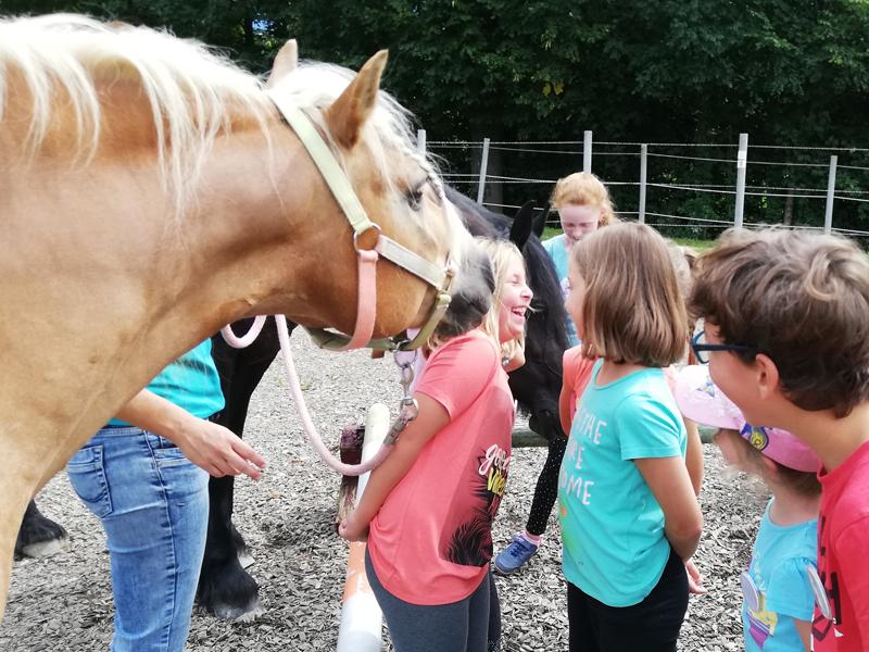 Kuschelige Pferde am Luech Hof