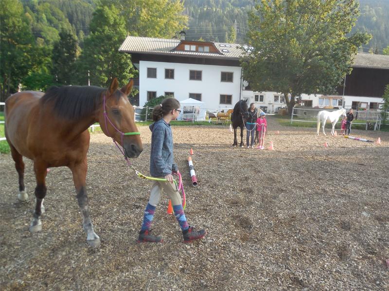 Pferd ärgere dich nicht!