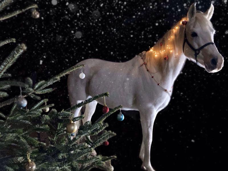 Viva als Weihnachtselfe