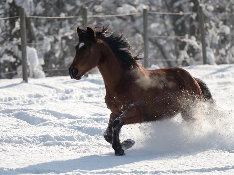 Waros im Schnee