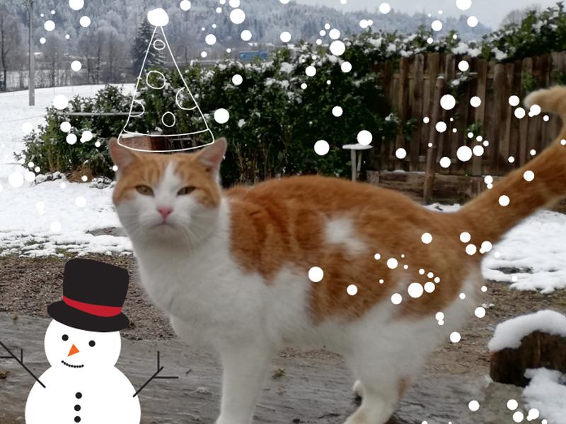 Katze Charly zu Weihnachten