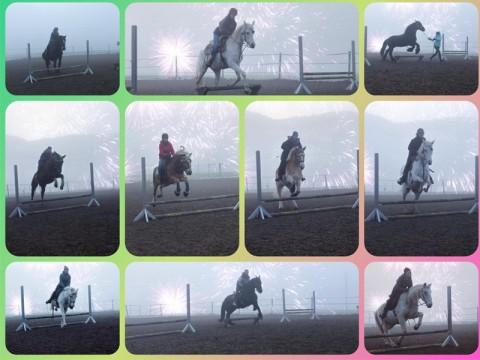 Alle Pferde sind gut ins neue Jahr gesprungen