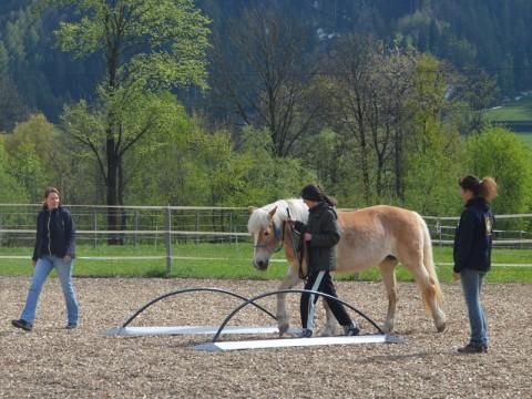 Kommunikation mit dem Pferd