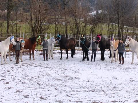 Unsere Pferde bekamen heuer Pommelmützen